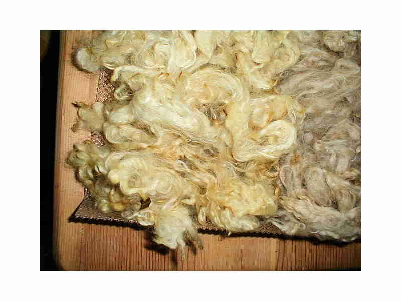 Clematis Natural Dye