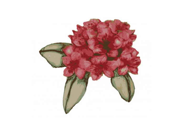 Rhododendron Clip Art