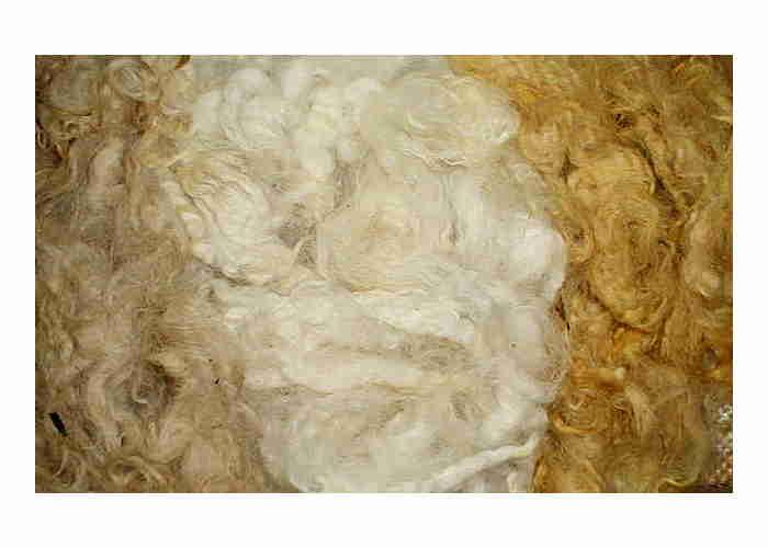 Romney Dyed Fleece